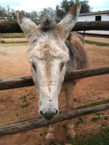 El refugio del burrito donkey sanctuary in Fuente de Piedra