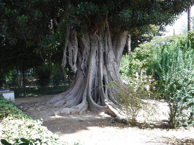 Monster tree in Seville.