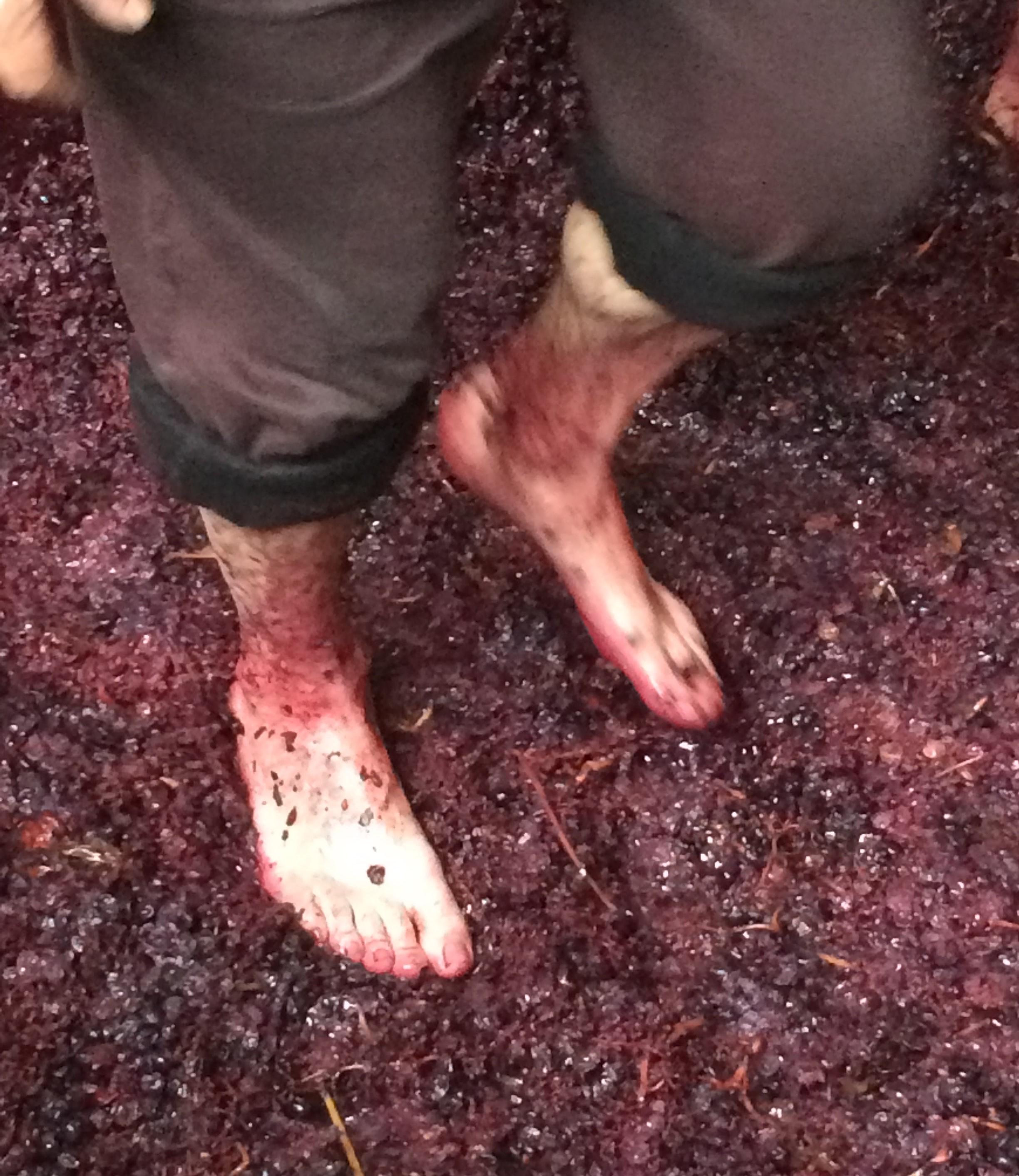 Treading grapes.
