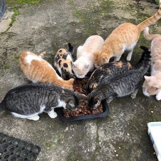Hungry cats.